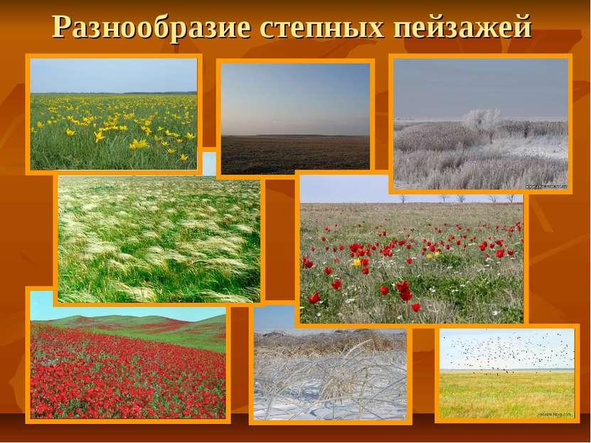 Разнообразие степных пейзажей