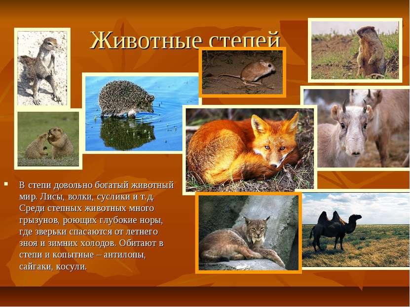Животные степей В степи довольно богатый животный мир. Лисы, волки, суслики и...