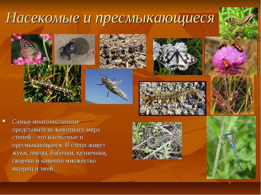 Насекомые и пресмыкающиеся Самые многочисленные представители животного мира ...