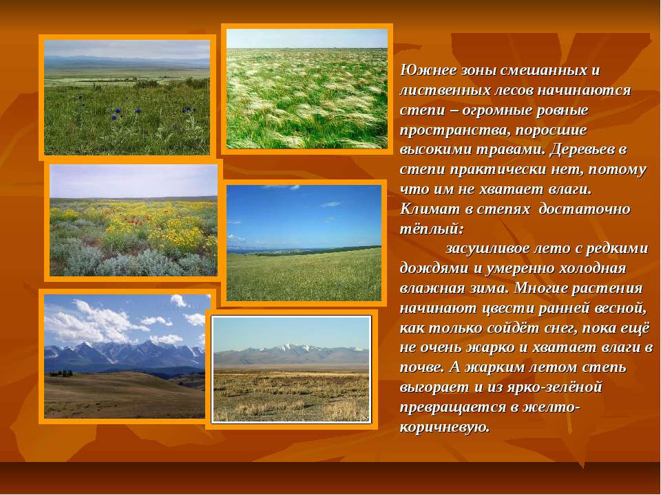 Южнее зоны смешанных и лиственных лесов начинаются степи – огромные ровные пр...