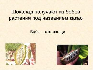 Шоколад получают из бобов растения под названием какао Бобы – это овощи