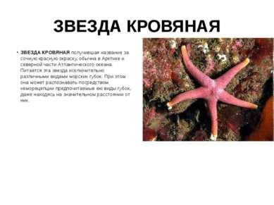 ЗВЕЗДА КРОВЯНАЯ ЗВЕЗДА КРОВЯНАЯ получившая название за сочную красную окраску...