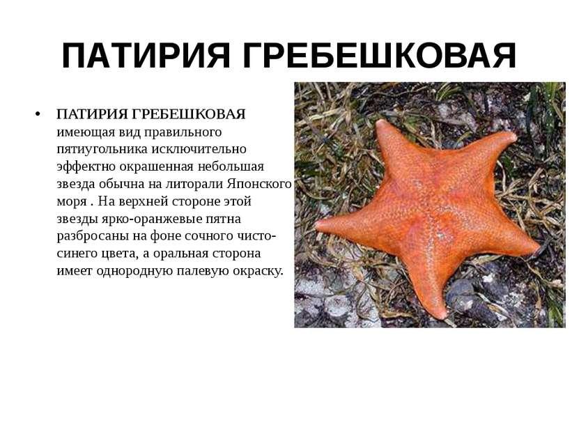 ПАТИРИЯ ГРЕБЕШКОВАЯ ПАТИРИЯ ГРЕБЕШКОВАЯ имеющая вид правильного пятиугольника...