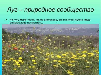 Луг – природное сообщество На лугу может быть так же интересно, как и в лесу,...