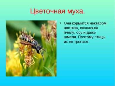 Цветочная муха. Она кормится нектаром цветков, похожа на пчелу, осу и даже шм...