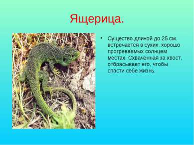 Ящерица. Существо длиной до 25 см. встречается в сухих, хорошо прогреваемых с...
