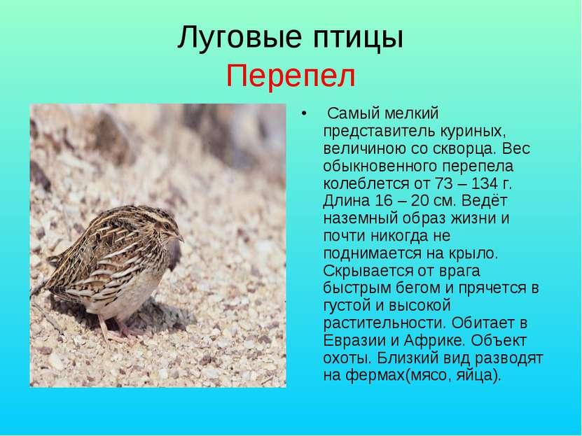 Луговые птицы Перепел Самый мелкий представитель куриных, величиною со скворц...