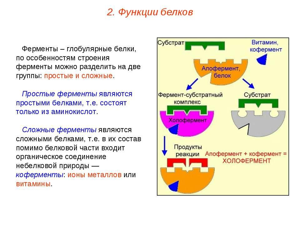 Ферменты – глобулярные белки, по особенностям строения ферменты можно раздели...
