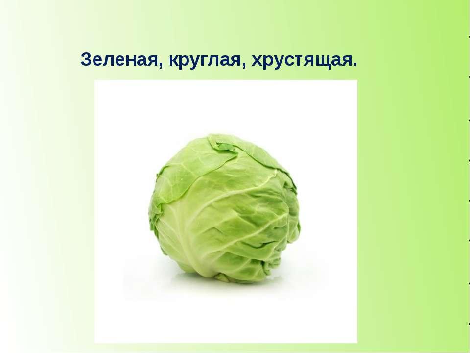 Зеленая, круглая, хрустящая. капуста