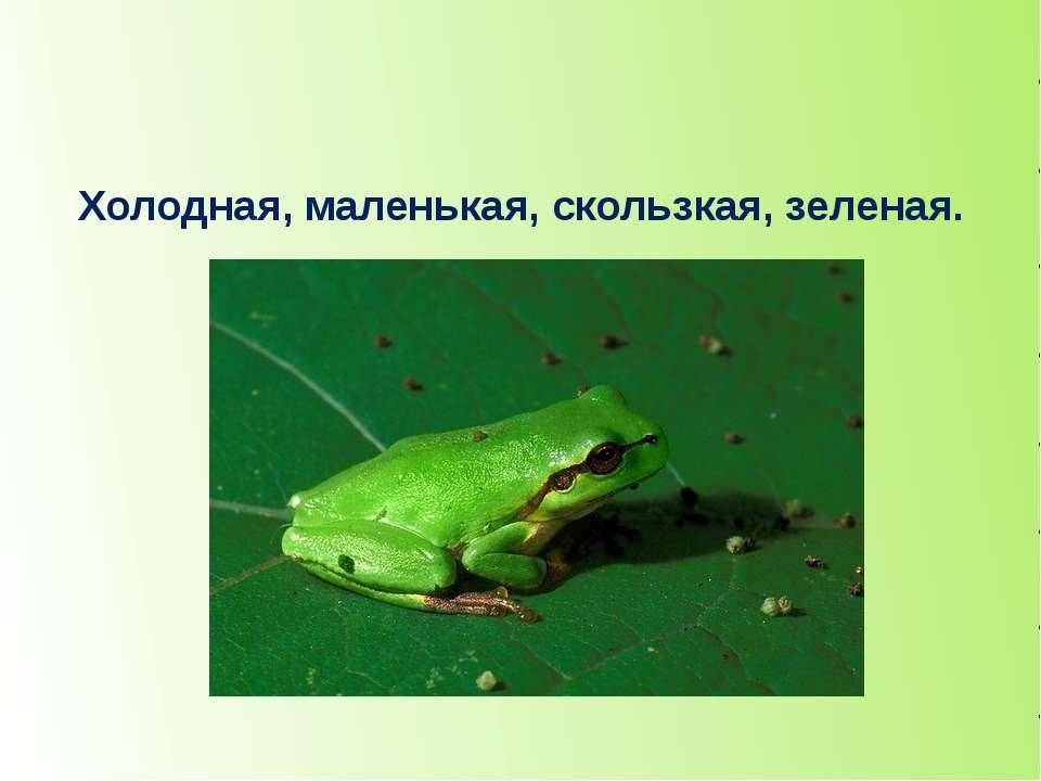 Холодная, маленькая, скользкая, зеленая. лягушка
