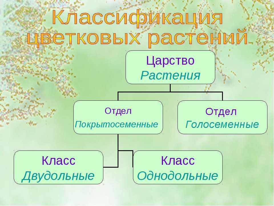 Классификация лилейников, виды лилейников