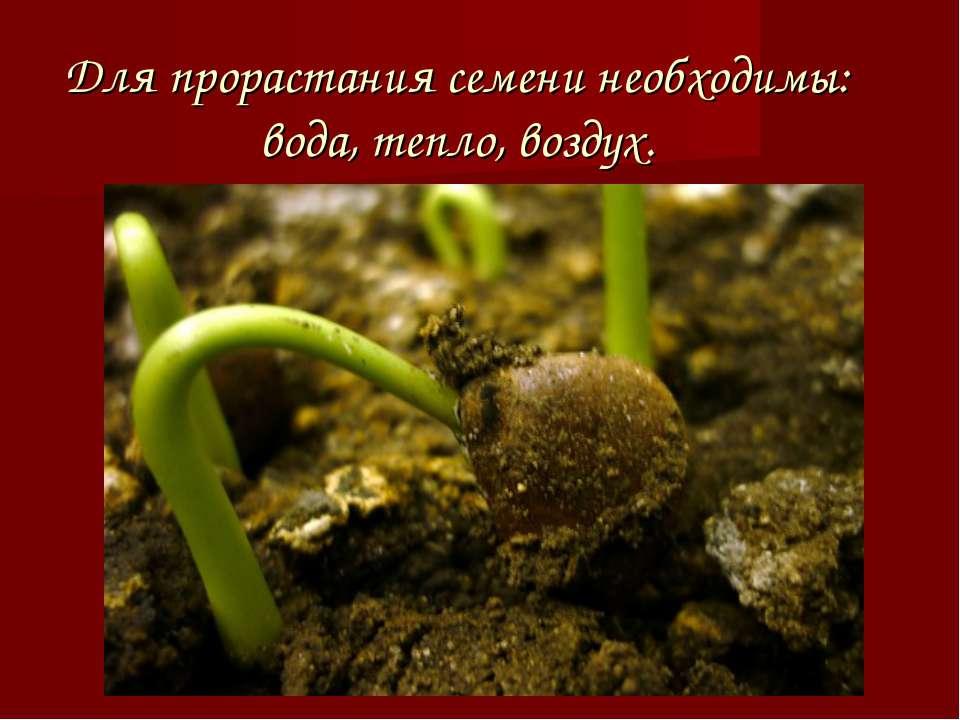 Для прорастания семени необходимы: вода, тепло, воздух.