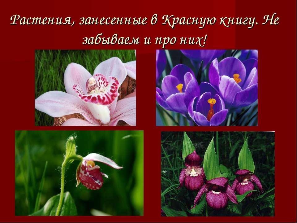 Растения, занесенные в Красную книгу. Не забываем и про них!