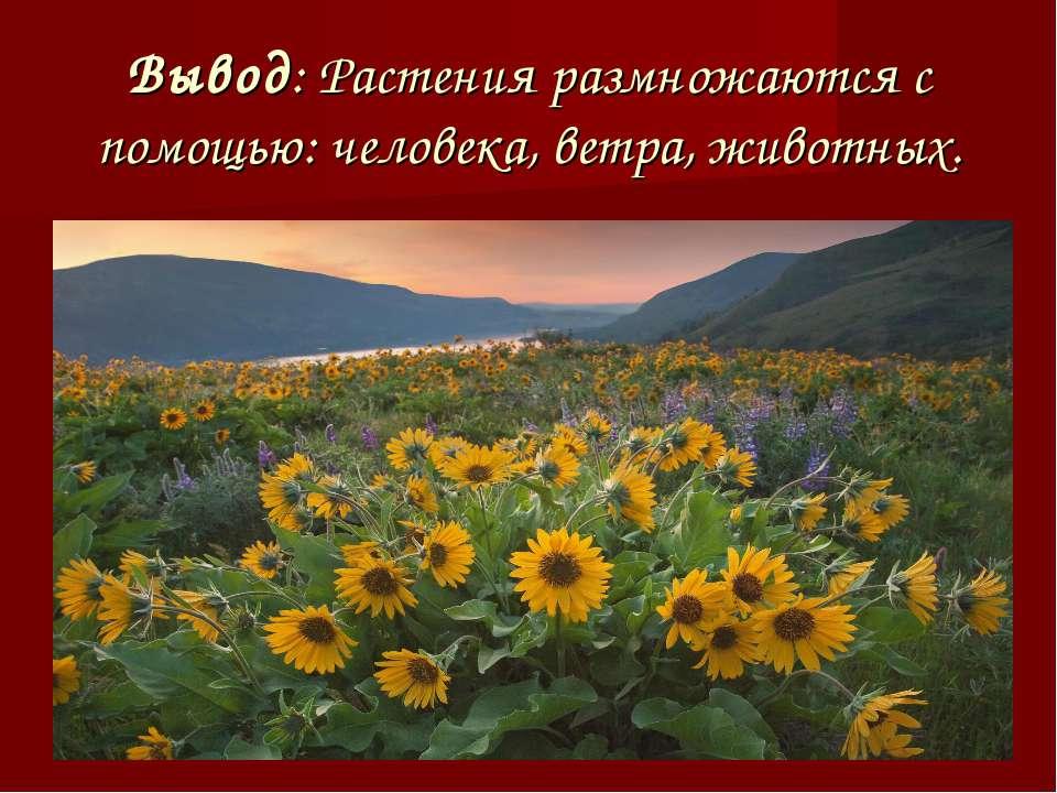 Вывод: Растения размножаются с помощью: человека, ветра, животных.