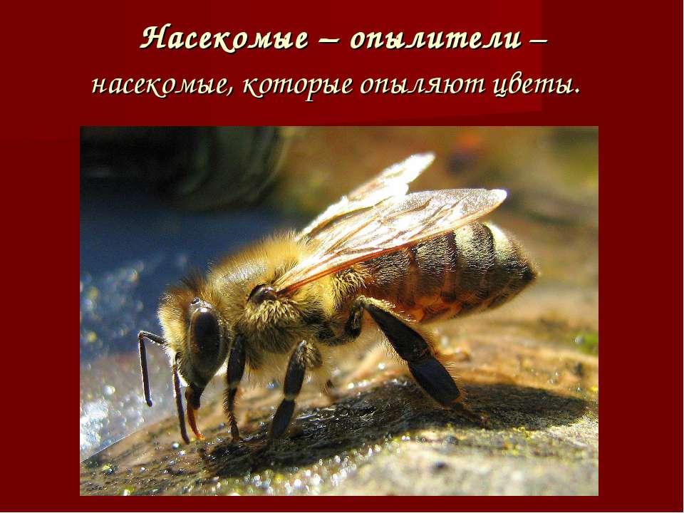 Насекомые – опылители – насекомые, которые опыляют цветы.