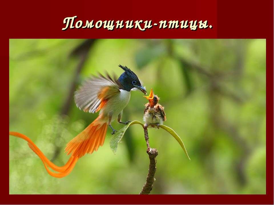 Помощники-птицы.
