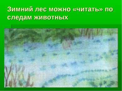 Зимний лес можно «читать» по следам животных
