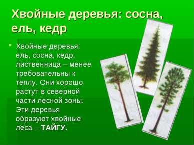Хвойные деревья: сосна, ель, кедр Хвойные деревья: ель, сосна, кедр, лиственн...