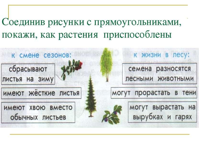 Соединив рисунки с прямоугольниками, покажи, как растения приспособлены
