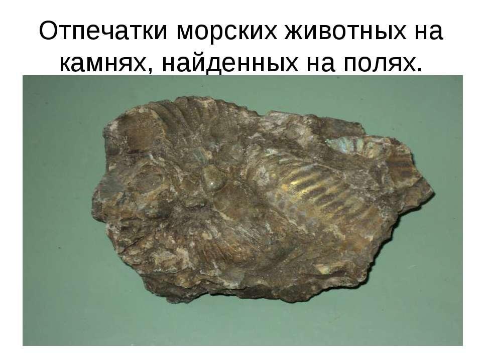 Отпечатки морских животных на камнях, найденных на полях.