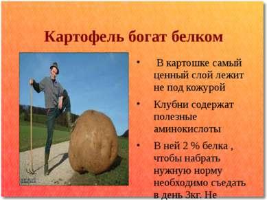 Картофель богат белком В картошке самый ценный слой лежит не под кожурой Клуб...