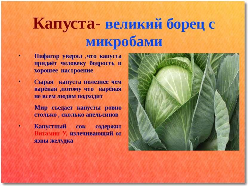 Капуста- великий борец с микробами Пифагор уверял ,что капуста придаёт челове...
