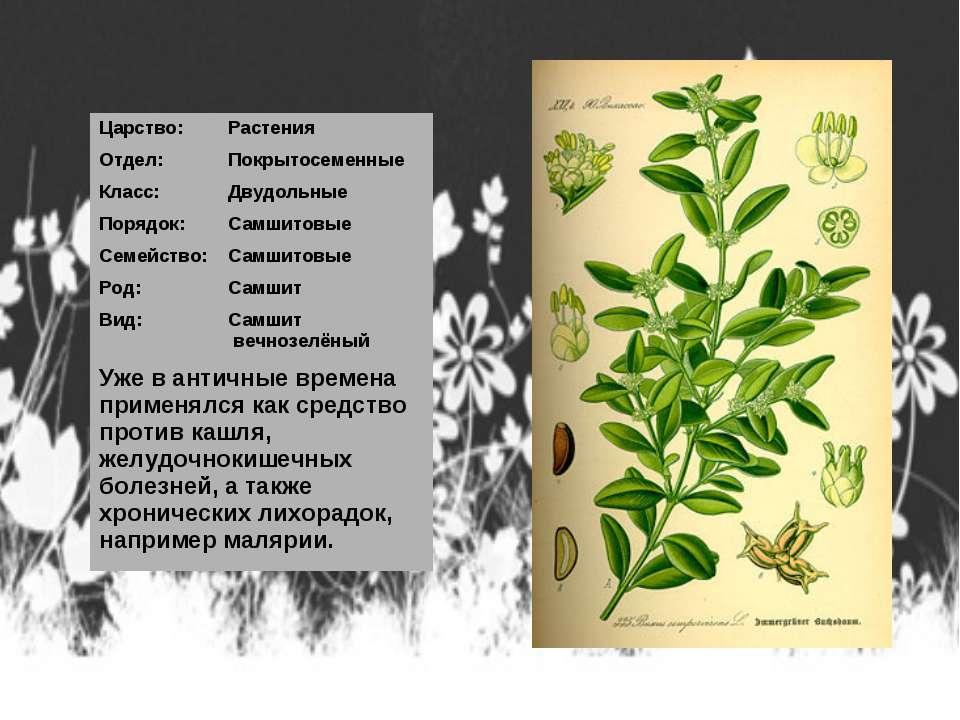 Царство: Растения Отдел: Покрытосеменные Класс: Двудольные Порядок: Самшитовы...