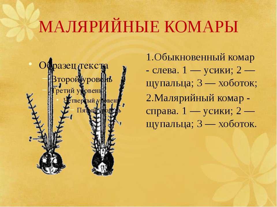 МАЛЯРИЙНЫЕ КОМАРЫ 1.Обыкновенный комар - слева. 1 — усики; 2 — щупальца; 3 — ...