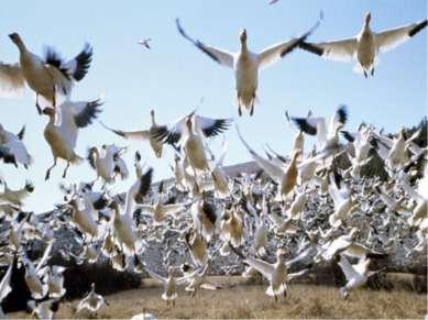 Пятый день творения В пятый день созданы животные, живущие в воде и летающие ...