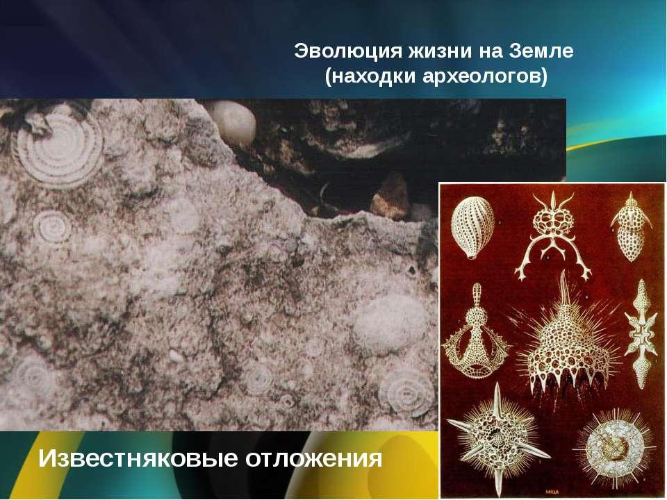 Эволюция жизни на Земле (находки археологов)