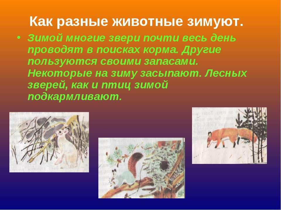 Как разные животные зимуют. Зимой многие звери почти весь день проводят в пои...