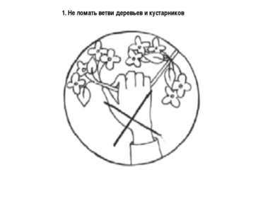 1. Не ломать ветви деревьев и кустарников