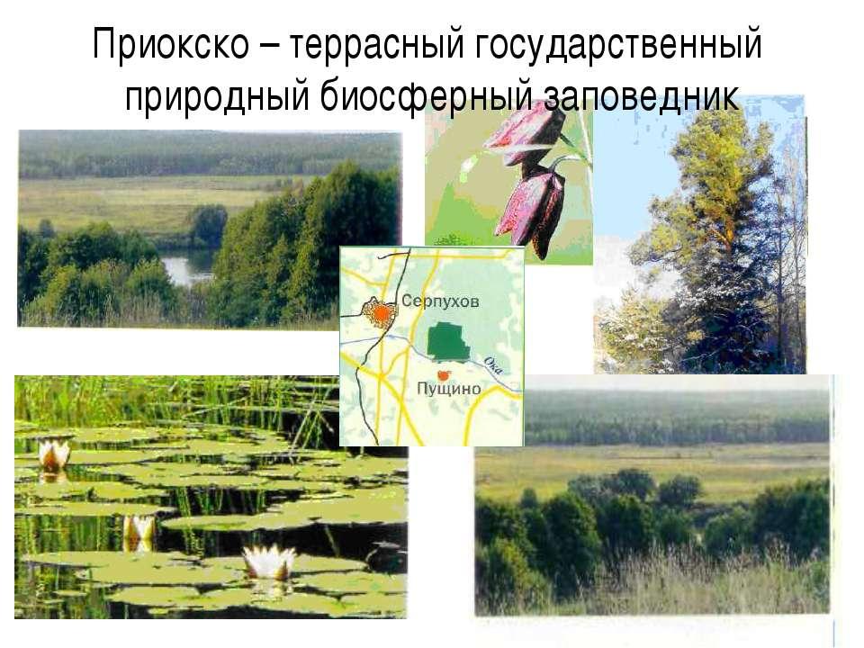 Приокско – террасный государственный природный биосферный заповедник