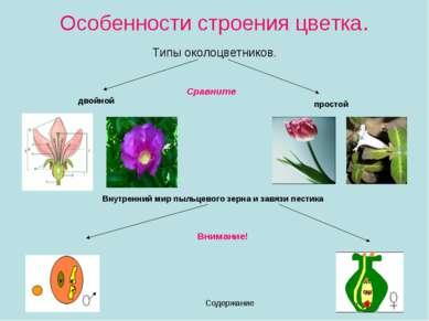 Особенности строения цветка. Типы околоцветников. Содержание двойной простой ...