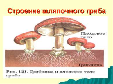 Строение шляпочного гриба