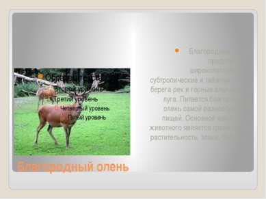 Благородный олень Благородный олень предпочитает широколиственные, субтропиче...