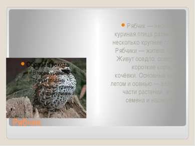 Рябчик Рябчик — небольшая куриная птица размерами несколько крупнее голубя. Р...