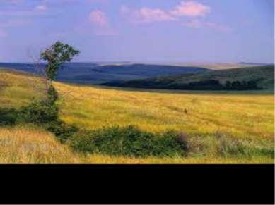 Украинские степи занимают возле 01% площади
