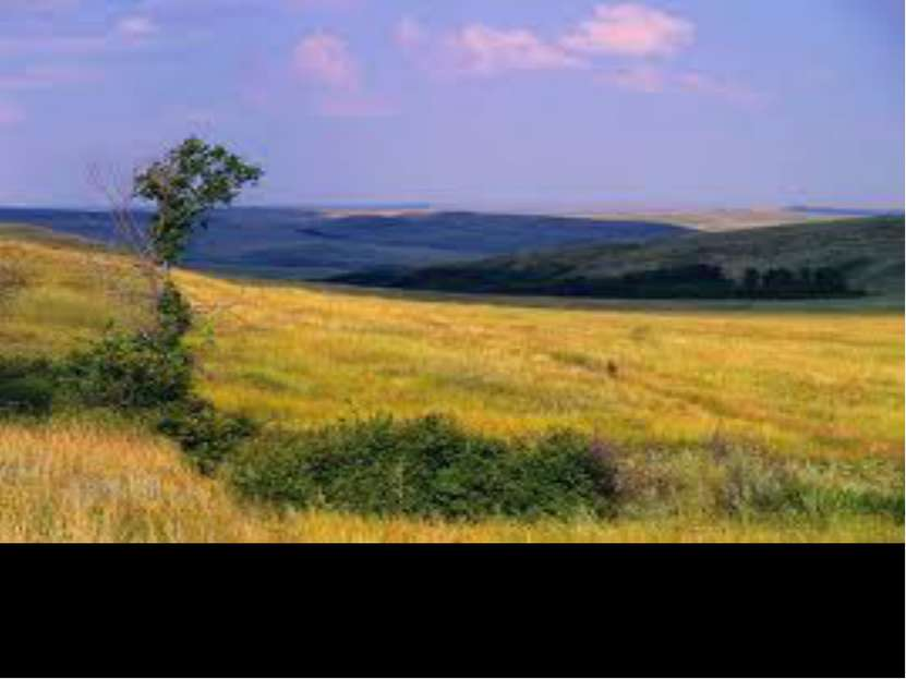 Украинские степи занимают почти 01% площади
