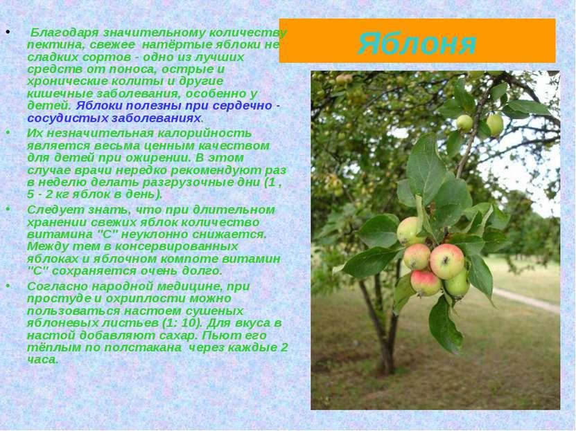Яблоня Благодаря значительному количеству пектина, свежее натёртые яблоки не ...