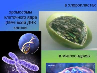 Местонахождение в клетке ДНК хромосомы клеточного ядра (99% всей ДНК клетки в...