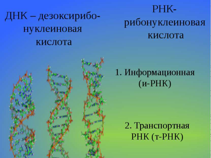 Нуклеиновые кислоты ДНК – дезоксирибо-нуклеиновая кислота РНК- рибонуклеинова...