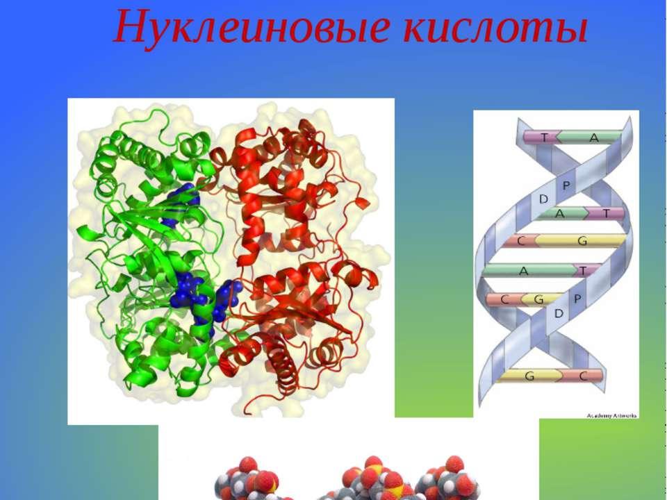 Органические вещества. Нуклеиновые кислоты