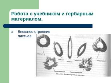 Работа с учебником и гербарным материалом. Внешнее строение листьев.
