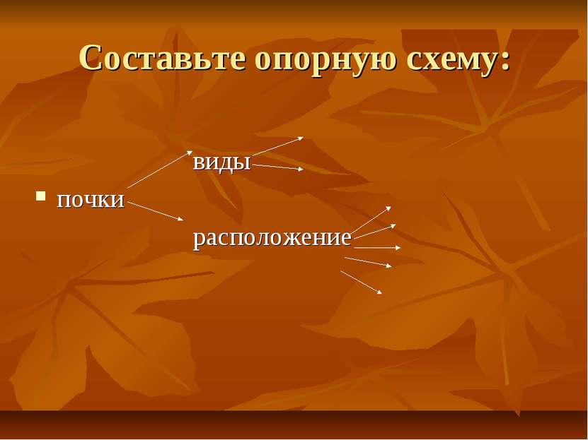 Составьте опорную схему: виды почки расположение