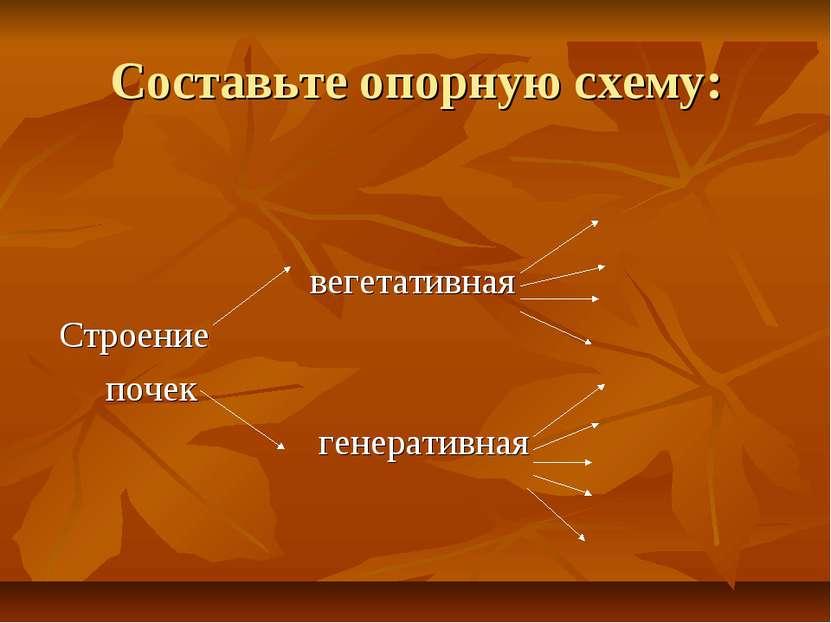 Составьте опорную схему: вегетативная Строение почек генеративная