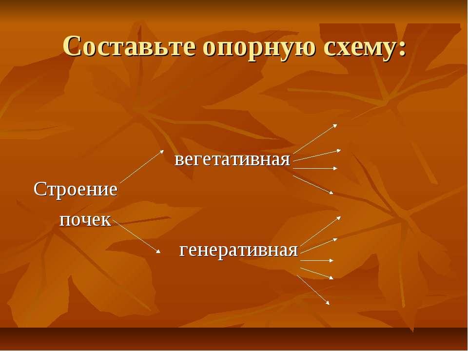 Составьте опорную схему: