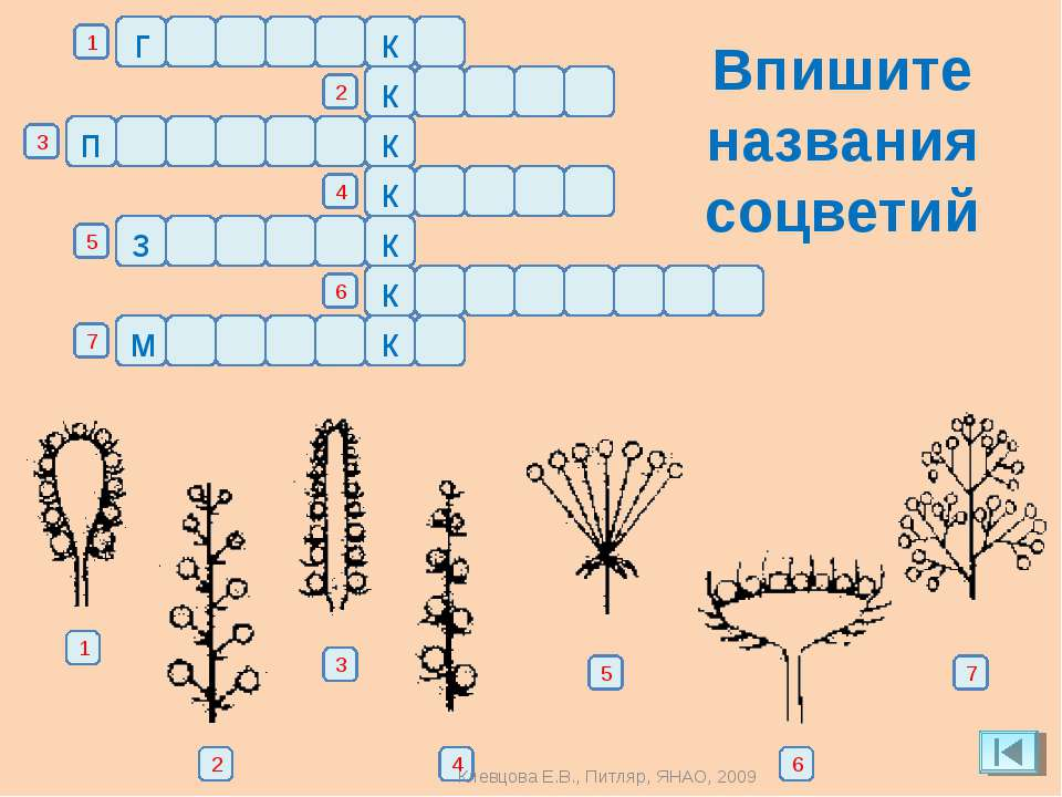 названия растений с ь знаком