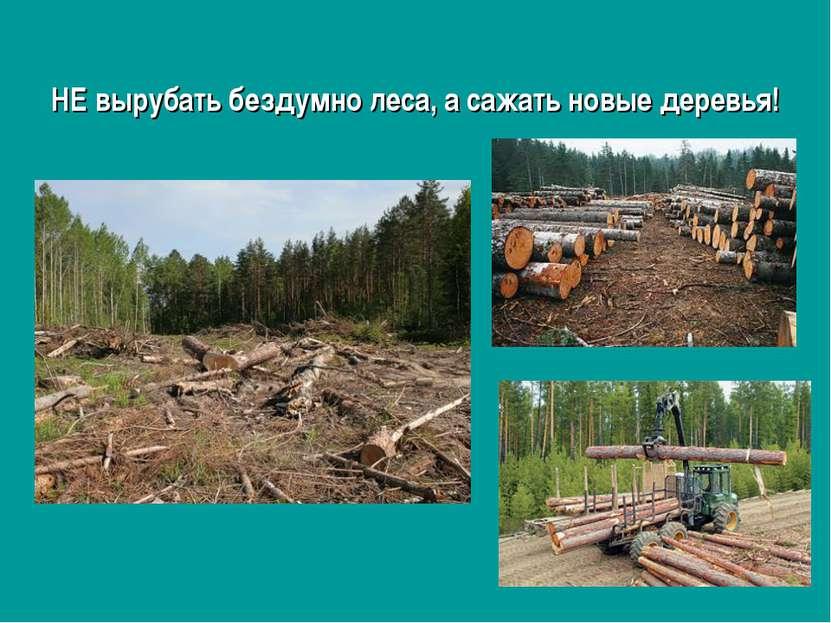 НЕ вырубать бездумно леса, а сажать новые деревья!