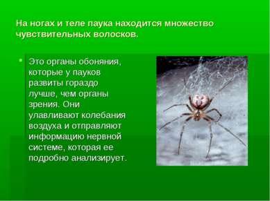 На ногах и теле паука находится множество чувствительных волосков. Это органы...